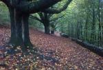 Path leading to Kendal Castle in Autumn - 2 minutes from club